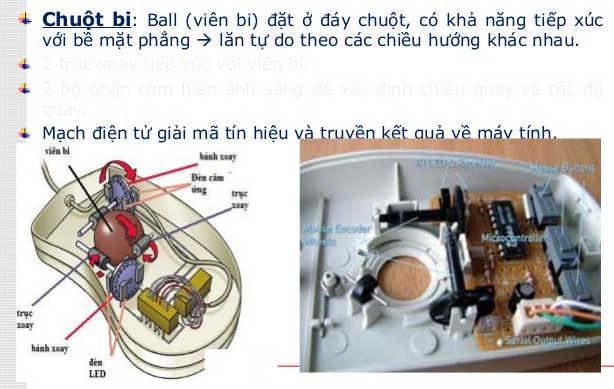 Chuột máy tính là gì? cấu tạo, tác dụng của chuột máy tính – Wiki Máy Tính